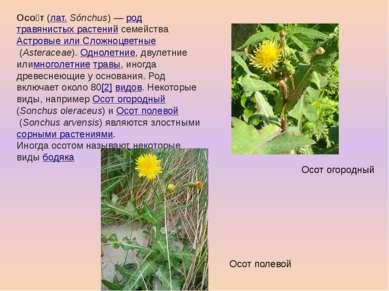 Осо т(лат.Sónchus)—родтравянистых растенийсемействаАстровые или Сложно...