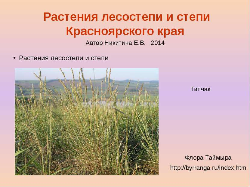 Растения лесостепи и степи Красноярского края Растения лесостепи и степи Типч...