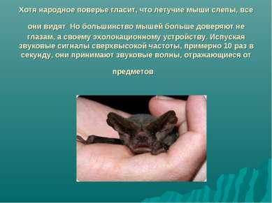 Хотя народное поверье гласит, что летучие мыши слепы, все они видят Но больши...