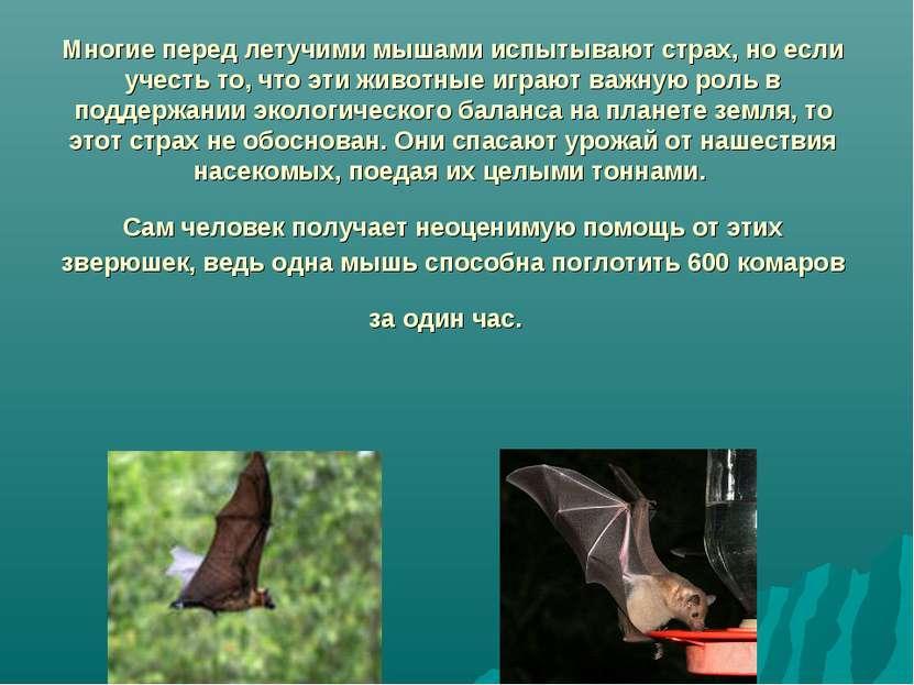 Многие перед летучими мышами испытывают страх, но если учесть то, что эти жив...