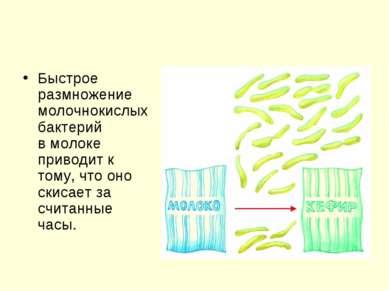 Быстрое размножение молочнокислых бактерий вмолоке приводит к тому, что оно ...