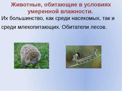 Животные, обитающие в условиях умеренной влажности. Их большинство, как среди...