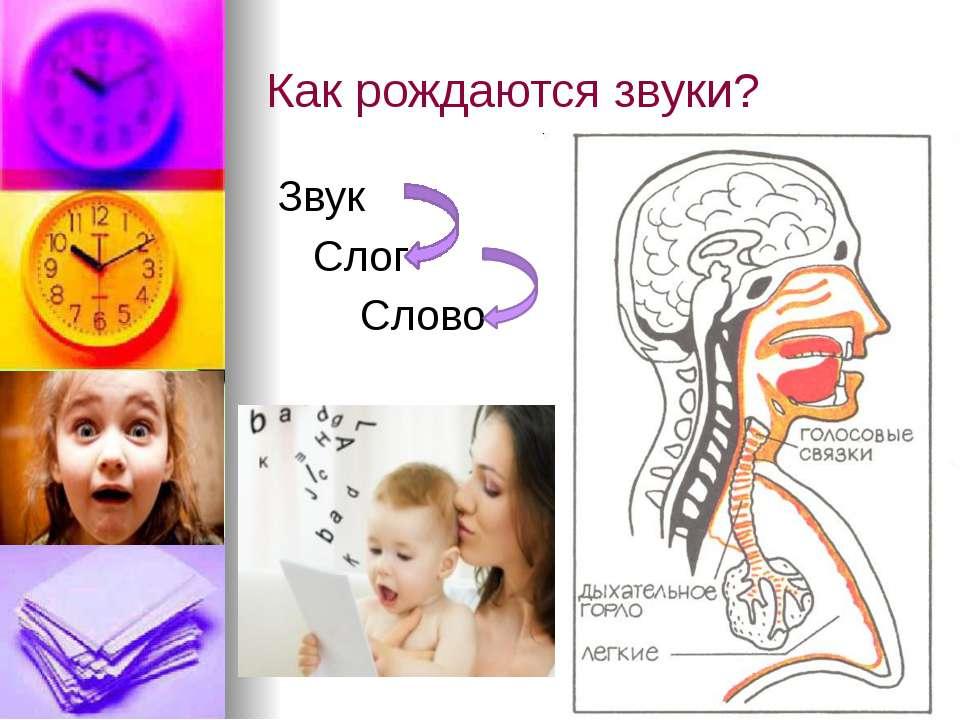 Как рождаются звуки? Звук Слог Слово