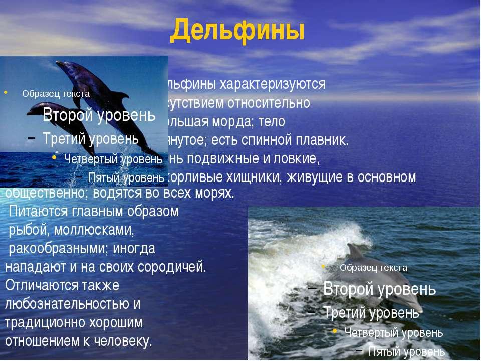 Дельфины Дельфины характеризуются присутствием относительно небольшая морда; ...