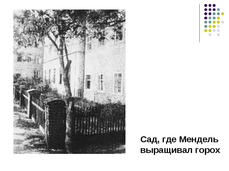 Сад, где Мендель выращивал горох