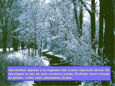 Как зимуют лиственные деревья и кустарники? Лиственные деревья и кустарники е...