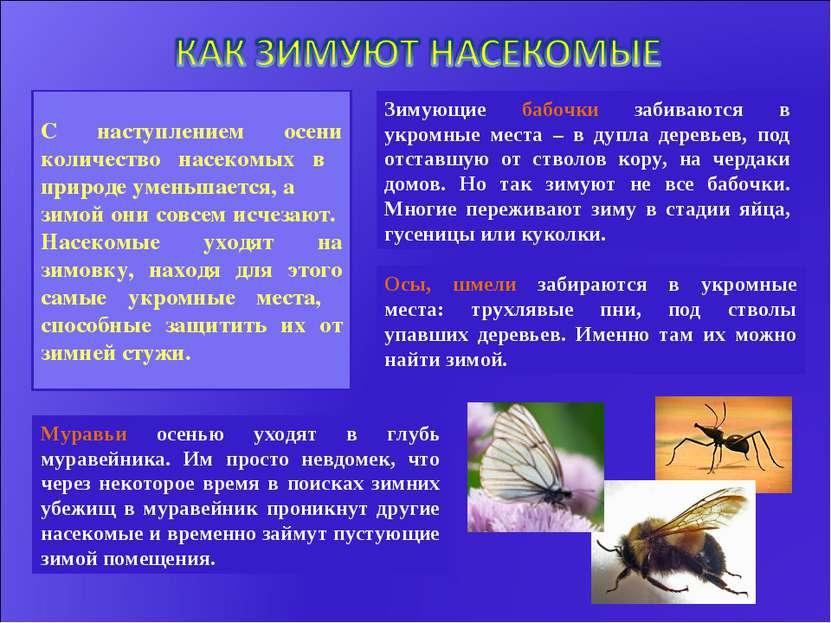 С наступлением осени количество насекомых в природе уменьшается, а зимой они ...