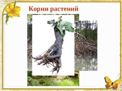 Корни растений