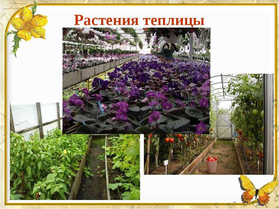 Растения теплицы