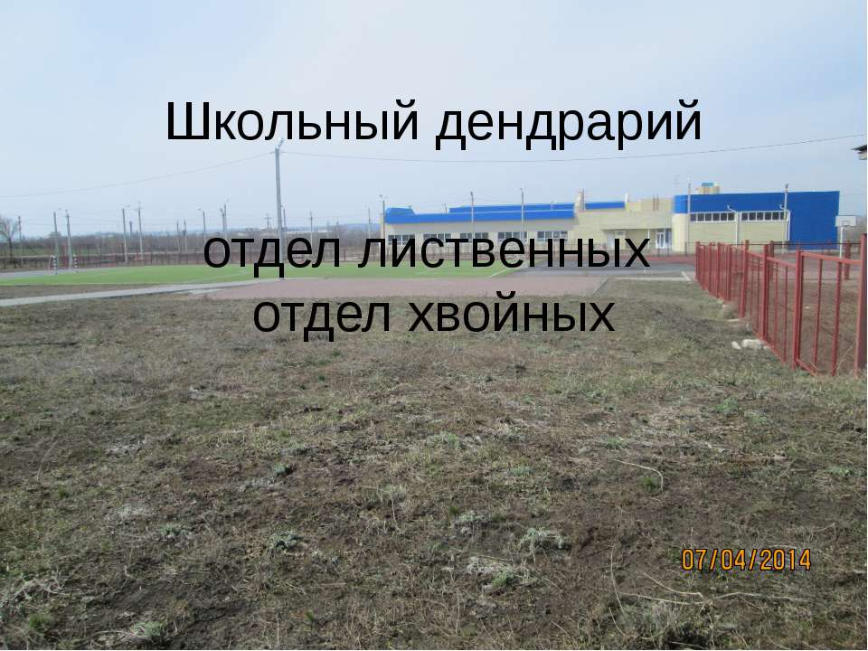 Школьный дендрарий отдел лиственных отдел хвойных