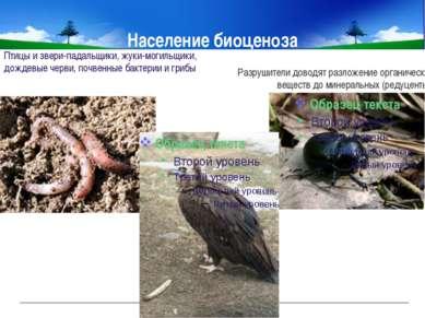 Население биоценоза Разрушители доводят разложение органических веществ до ми...