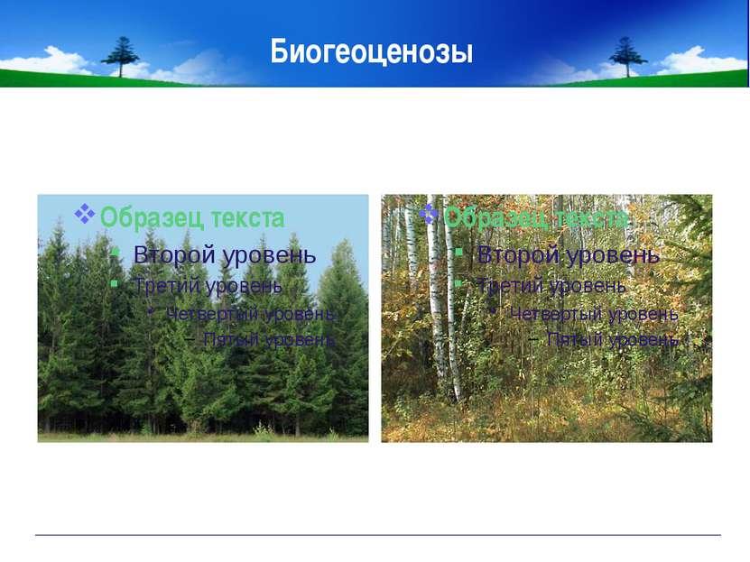 "Биогеоценозы МОУ ""СОШ №2"""