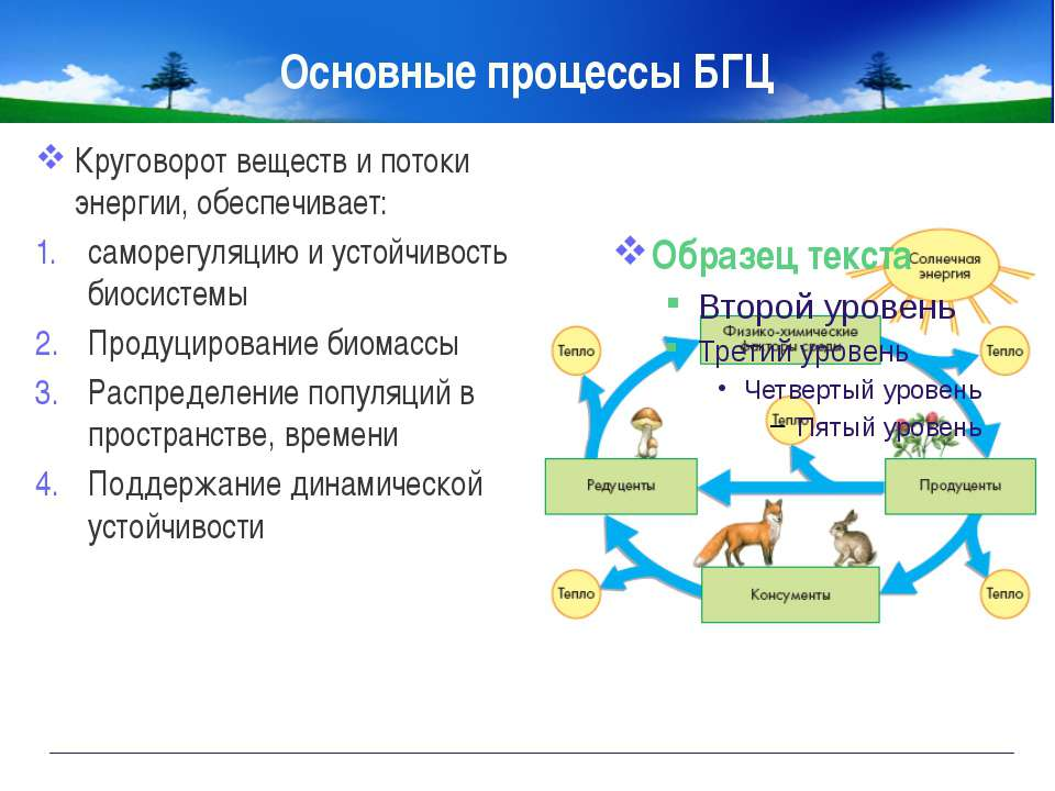 Основные процессы БГЦ Круговорот веществ и потоки энергии, обеспечивает: само...
