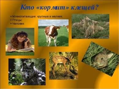 Кто «кормит» клещей? Млекопитающие: крупные и мелкие; Птицы; Человек