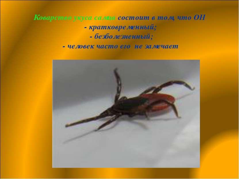 Коварство укуса самца состоит в том, что ОН - кратковременный; - безболезненн...