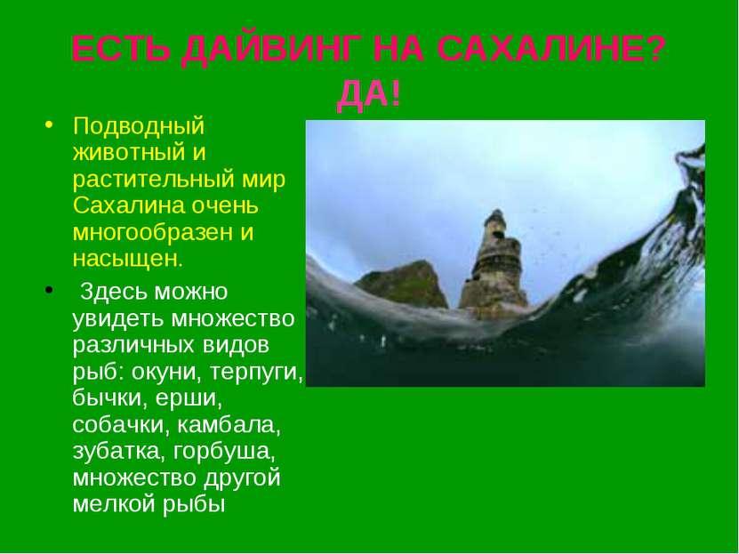 ЕСТЬ ДАЙВИНГ НА САХАЛИНЕ? ДА! Подводный животный и растительный мир Сахалина ...