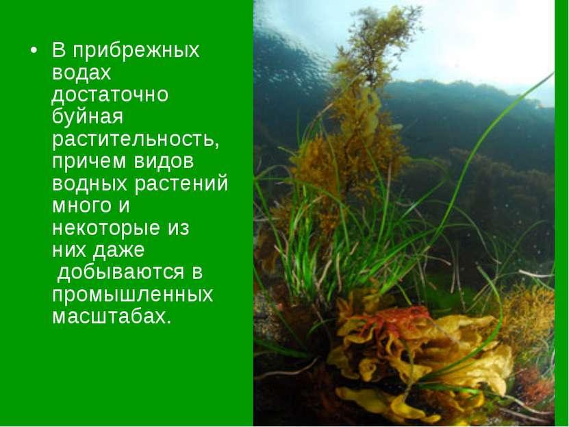 В прибрежных водах достаточно буйная растительность, причем видов водных раст...