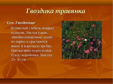 Гвоздика травянка Сем. Гвоздичные Ветвистый стебель покрыт пушком. Листья узк...