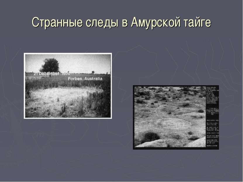 Странные следы в Амурской тайге