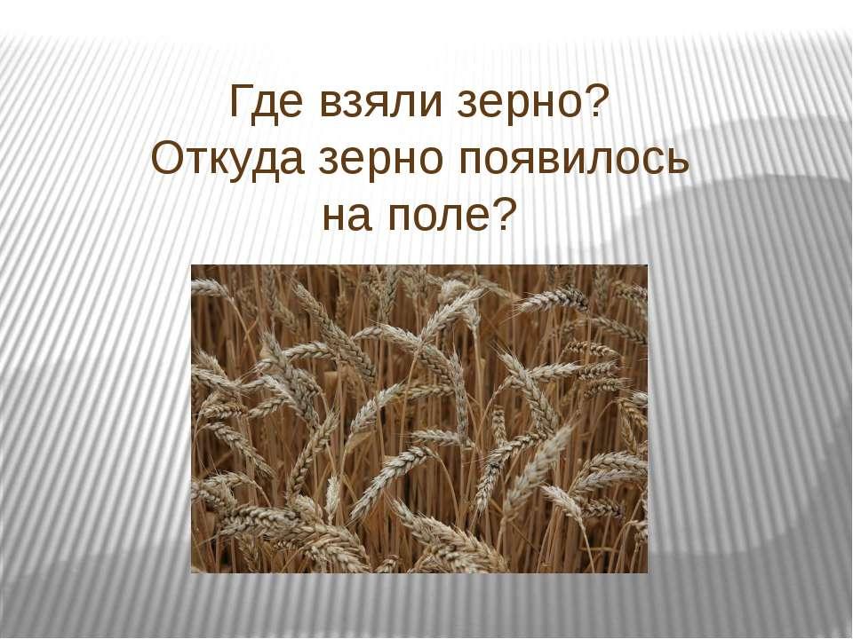 Где взяли зерно? Откуда зерно появилось на поле?