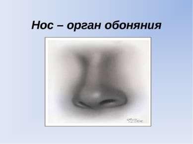 Нос – орган обоняния