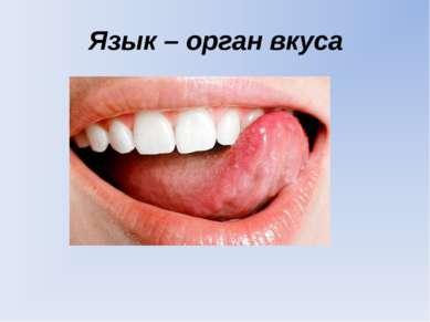 Язык – орган вкуса