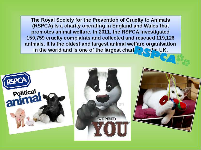 The Royal Society for the Prevention of Cruelty to Animals (RSPCA) is a chari...