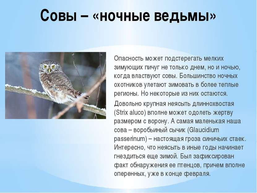 Совы – «ночные ведьмы» Опасность может подстерегать мелких зимующих пичуг не ...
