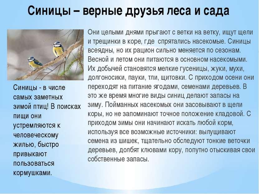 Синицы – верные друзья леса и сада Они целыми днями прыгают с ветки на ветку,...