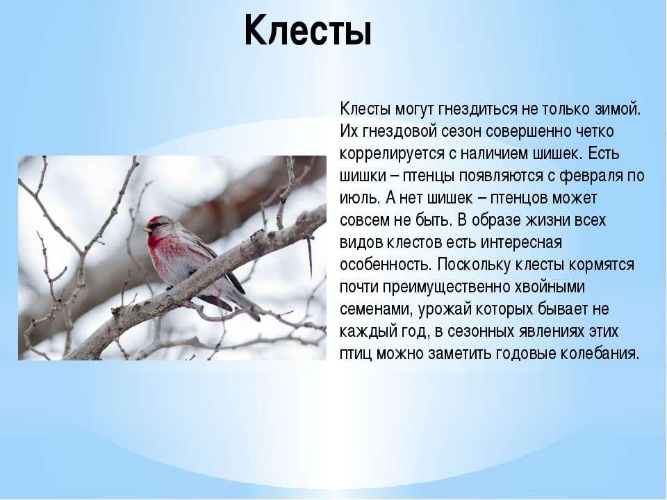 Клесты Клесты могут гнездиться не только зимой. Их гнездовой сезон совершенно...
