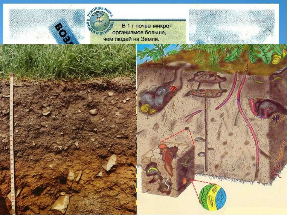 Образование почвы – результат взаимодействия горных пород, климата, поверхнос...
