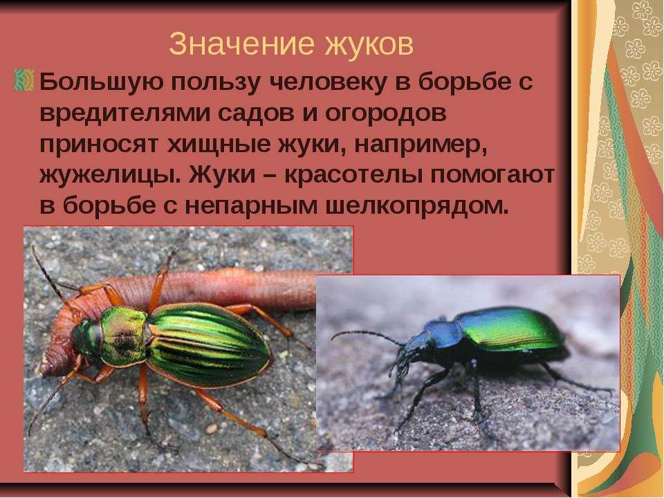 Значение жуков Большую пользу человеку в борьбе с вредителями садов и огородо...