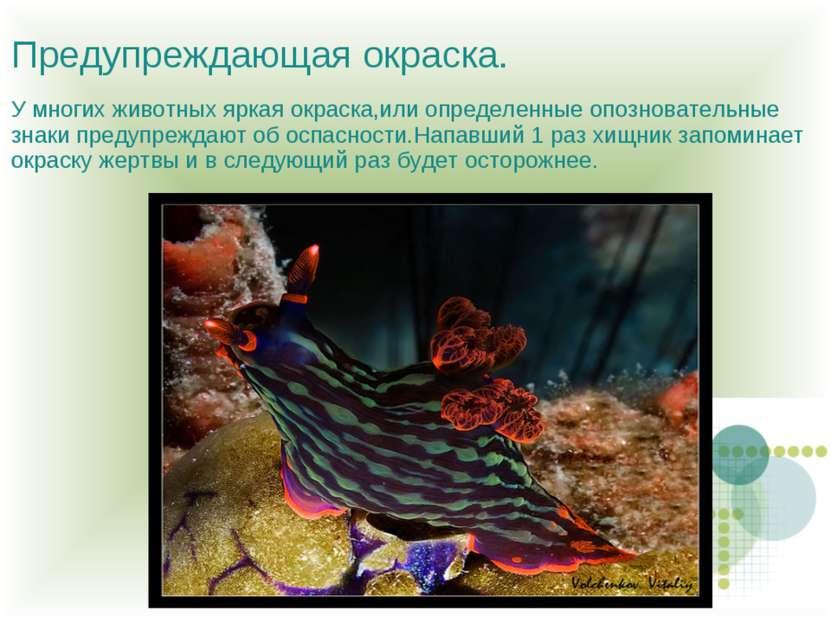 Предупреждающая окраска. У многих животных яркая окраска,или определенные опо...