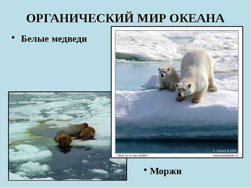 ОРГАНИЧЕСКИЙ МИР ОКЕАНА Белые медведи Моржи