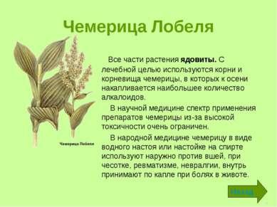 Чемерица Лобеля Все части растения ядовиты. С лечебной целью используются кор...