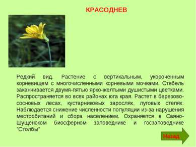Редкий вид. Растение с вертикальным, укороченным корневищем с многочисленными...