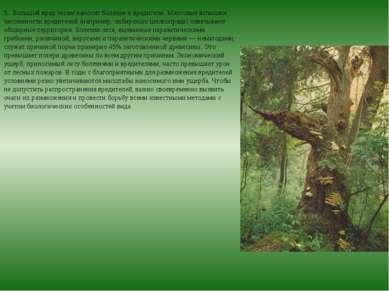 5. Большой вред лесам наносят болезни и вредители. Массовые вспышки численно...