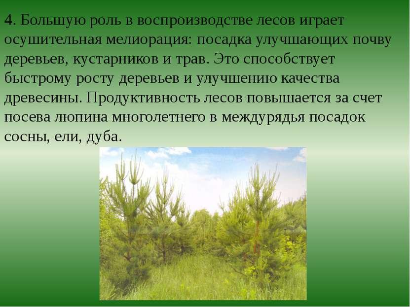 4. Большую роль в воспроизводстве лесов играет осушительная мелиорация: посад...