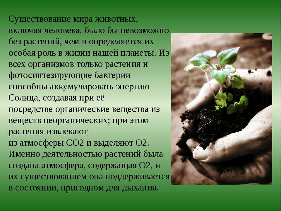 Существование мира животных, включая человека, было бы невозможно без растени...