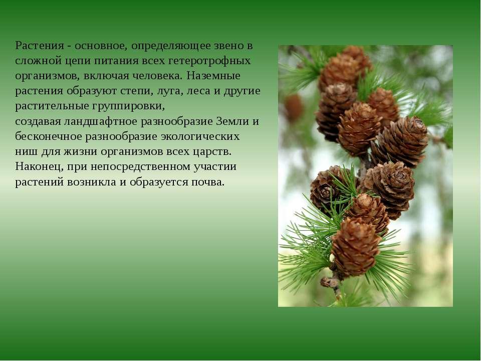 Растения- основное, определяющее звено в сложной цепи питания всех гетеротро...