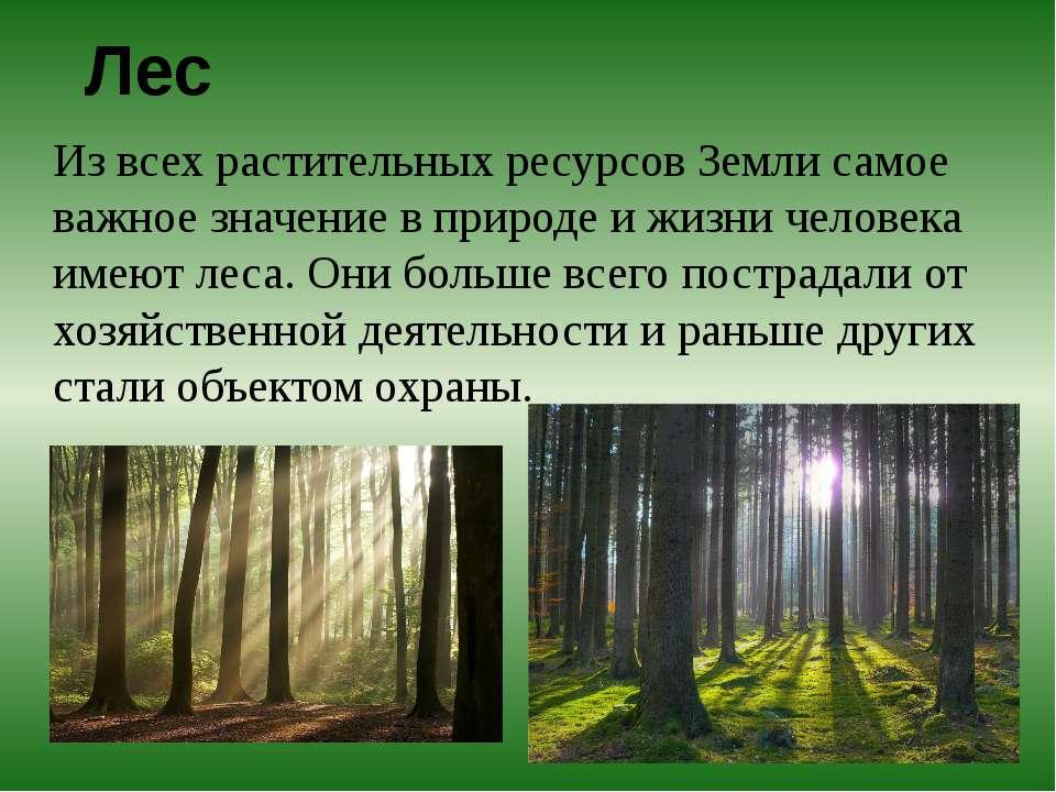 Лес Из всех растительных ресурсов Земли самое важное значение в природе и жиз...