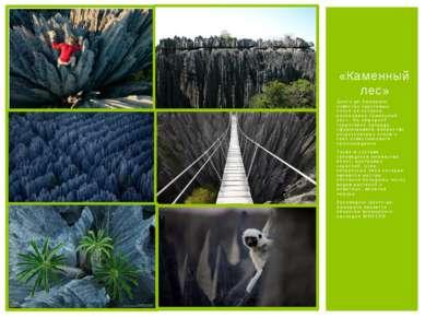 Цинги-де-Бемараха известен карстовым плато на котором расположен «каменный ле...
