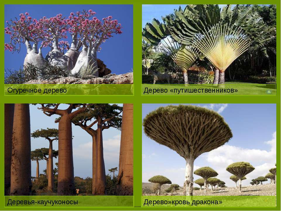 Лесами покрыто всего 10%.Основная масса расположена на востоке Природные бога...