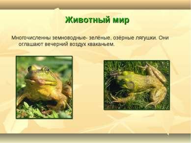 Животный мир Многочисленны земноводные- зелёные, озёрные лягушки. Они оглашаю...