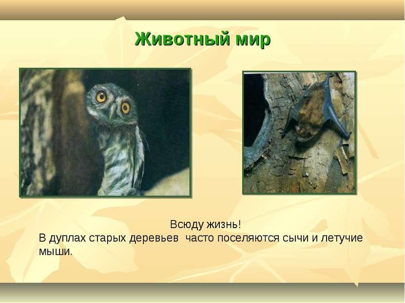 Животный мир Всюду жизнь! В дуплах старых деревьев часто поселяются сычи и ле...