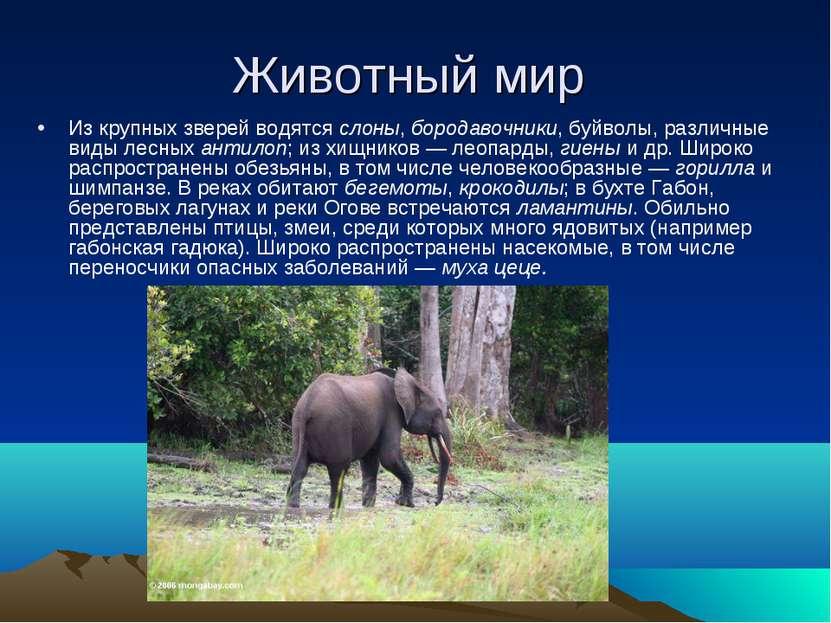 Животный мир Из крупных зверей водятся слоны, бородавочники, буйволы, различн...