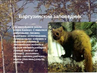 Баргузинский заповедник Он находится около озера Байкал. Славится кедровыми л...