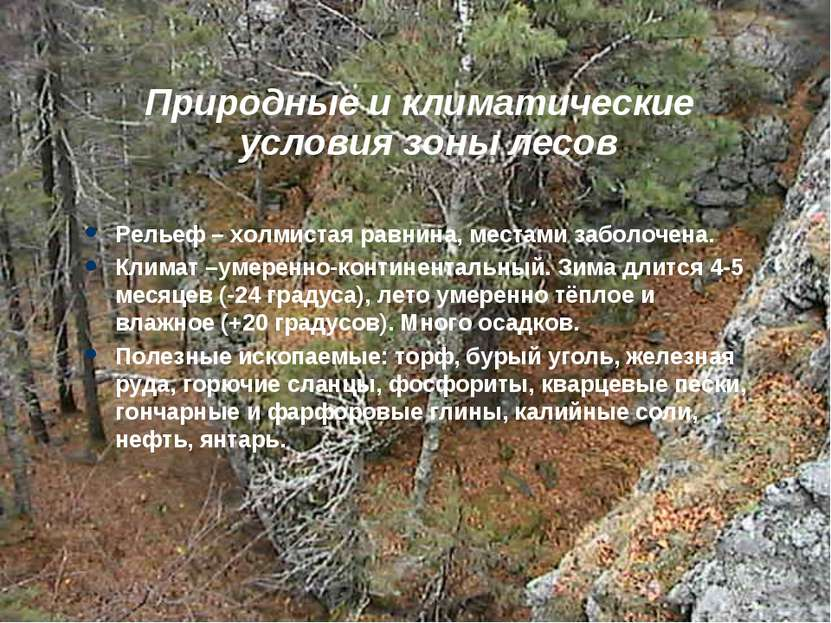 Природные и климатические условия зоны лесов Рельеф – холмистая равнина, мест...