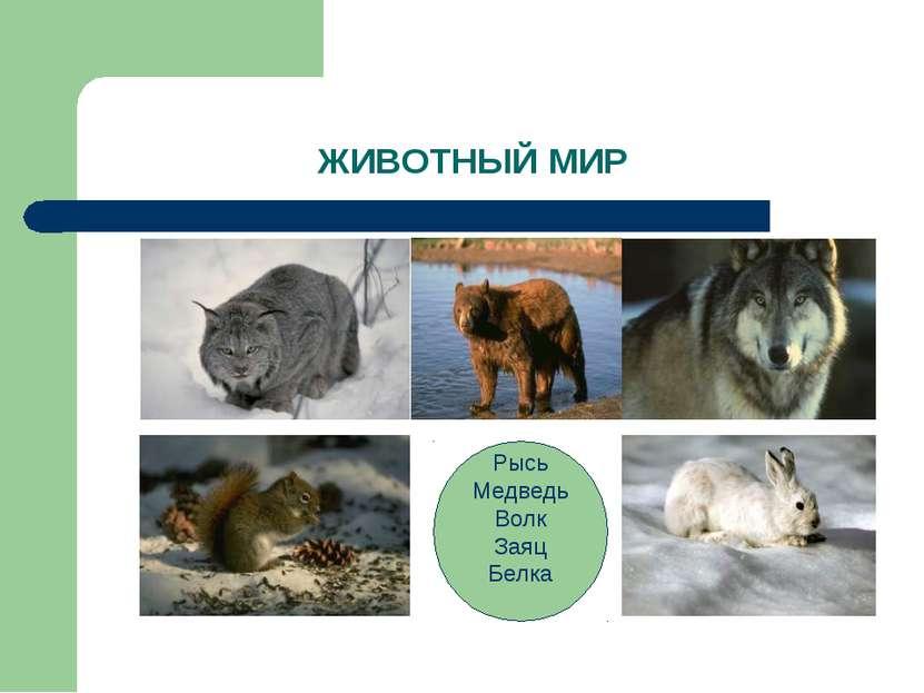 ЖИВОТНЫЙ МИР Рысь Медведь Волк Заяц Белка
