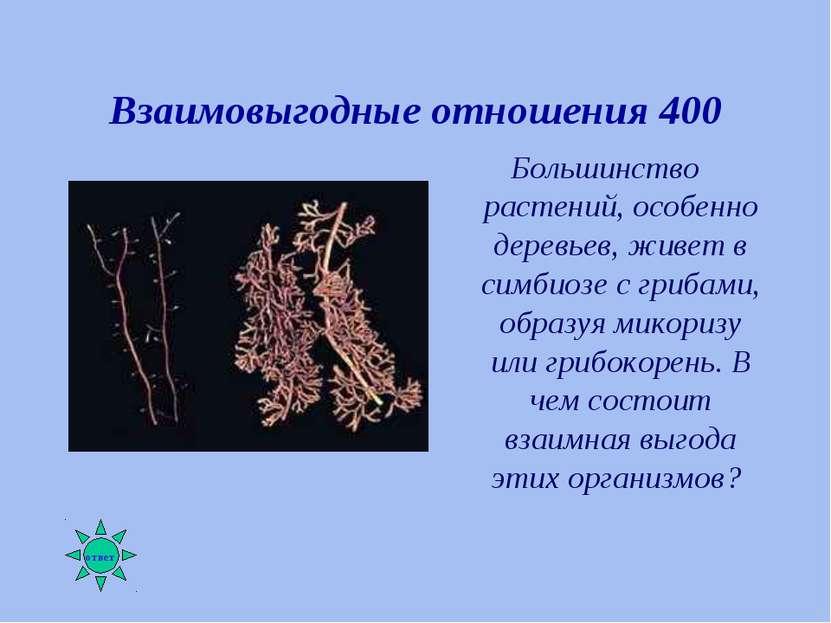 Взаимовыгодные отношения 400 Большинство растений, особенно деревьев, живет в...